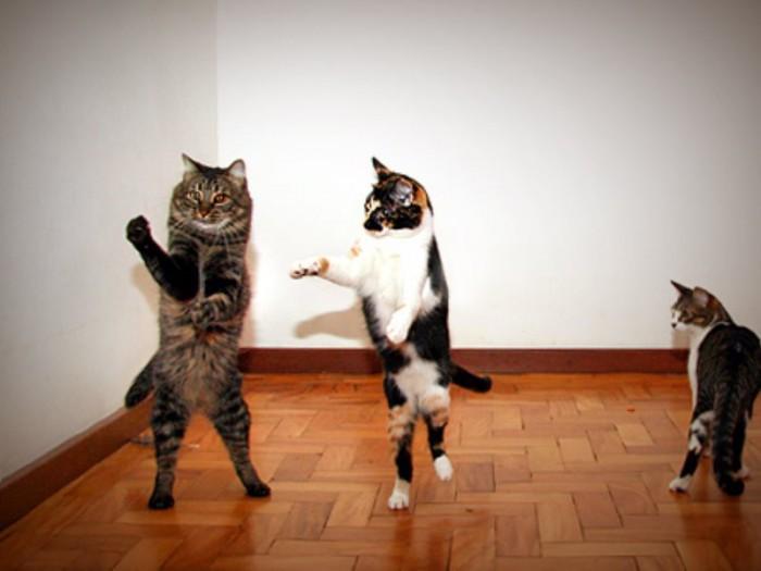 Кошачья дискотека-2015